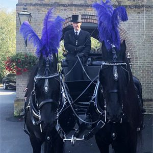 Horses with hearse