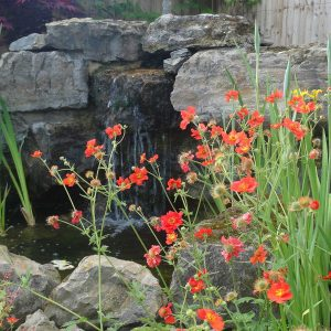 Water feature and flowers